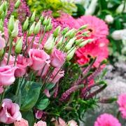Květiny FLORIS řezané květiny Brno