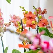 Květiny FLORIS pokojové květiny Brno