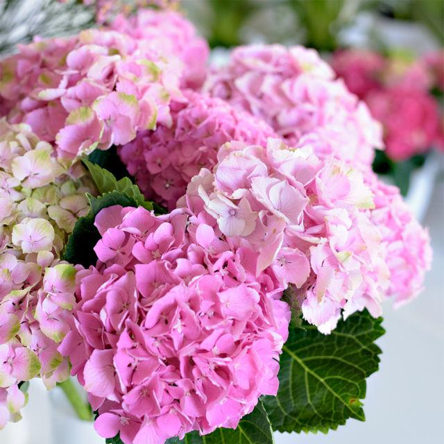 Květiny na konec školního roku Brno