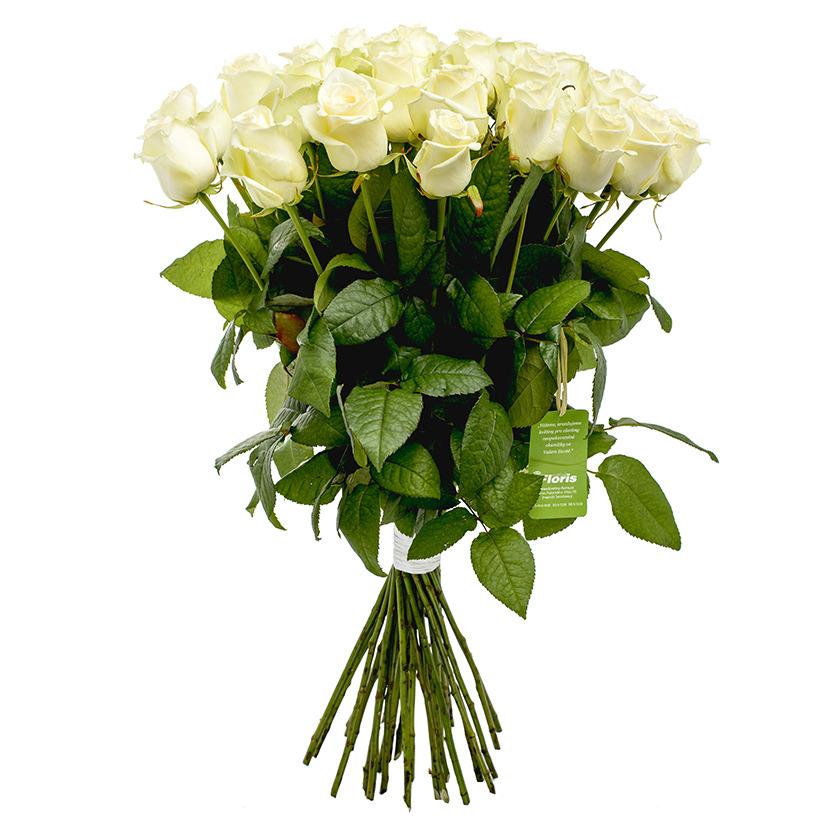 Kytice bílých růží - Brno