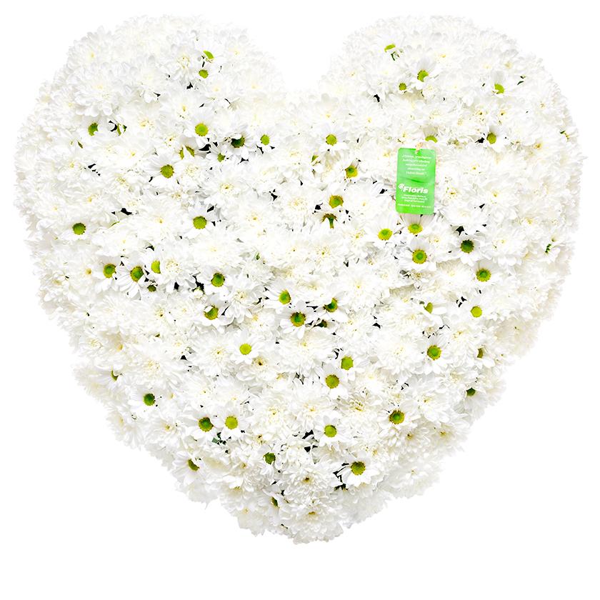 Smuteční srdce chryzantémy